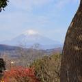 写真: 吾妻山公園-150