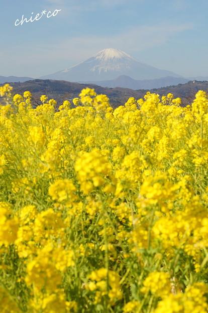 写真: 吾妻山公園-157