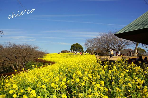吾妻山公園-163