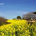 写真: 吾妻山公園-163