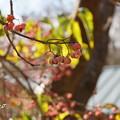 写真: 吾妻山公園-167
