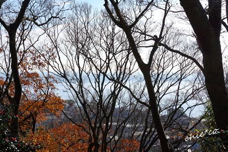 吾妻山公園-181