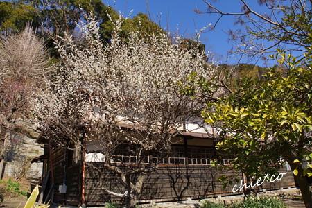 北鎌倉-372