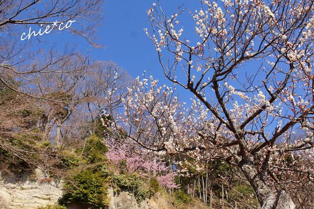 北鎌倉-377
