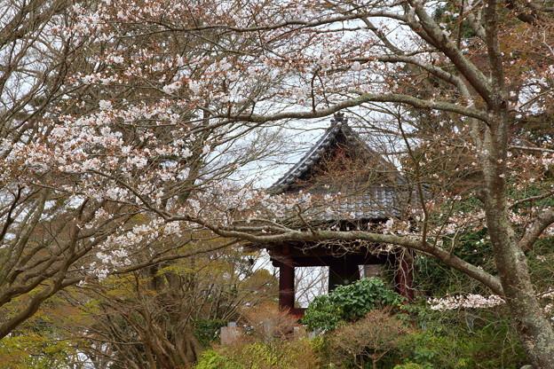 鎌倉-248
