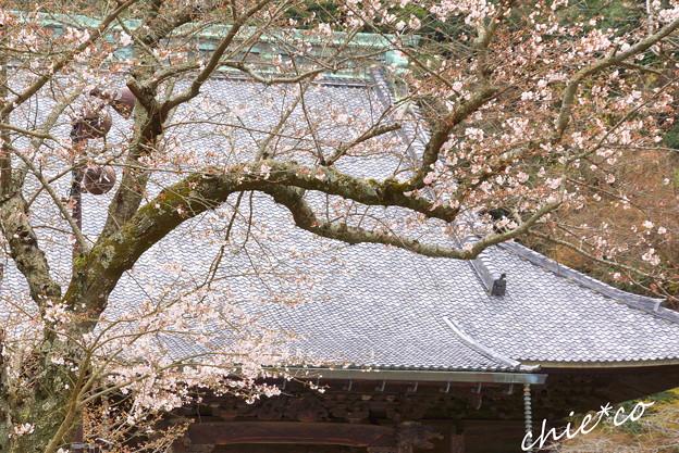 鎌倉-255