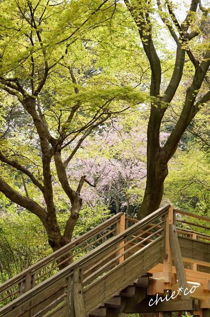 鎌倉-690