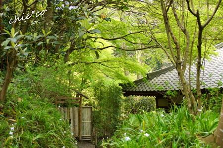 鎌倉-710