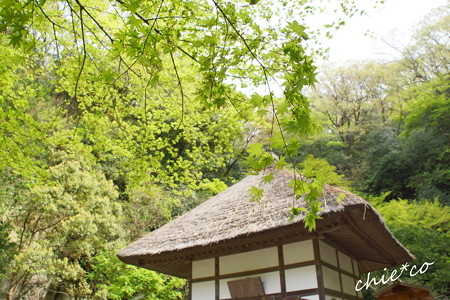 鎌倉-713