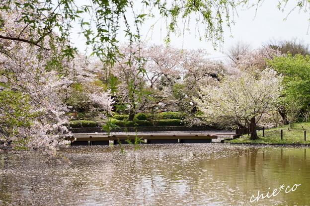鎌倉-809