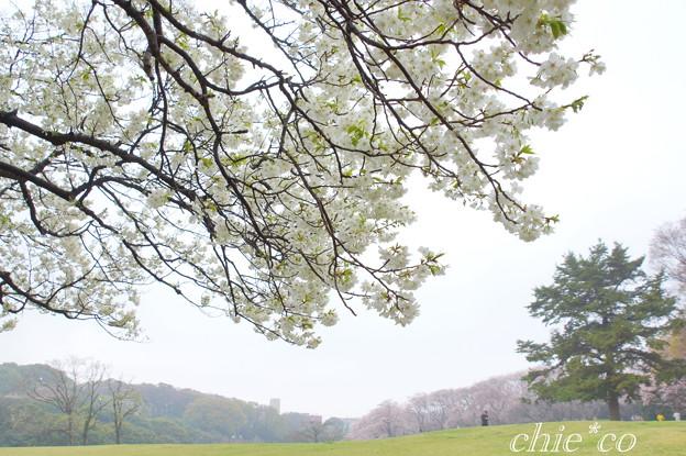 根岸森林公園-093