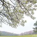 写真: 根岸森林公園-093