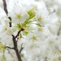 写真: 根岸森林公園-097