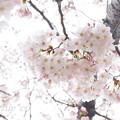 写真: 根岸森林公園-102
