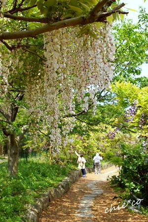 横須賀しょうぶ園-351