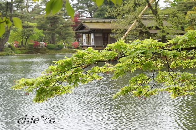 金沢-508