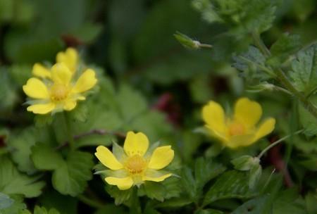 この花・・なぁに? 春の野原で・・・♪