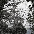 Photos: 雪見