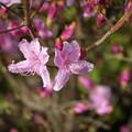 Photos: 春です