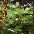 出島の木(4)(5) DSCF4942