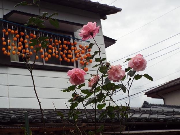 干し柿とバラ1511200003