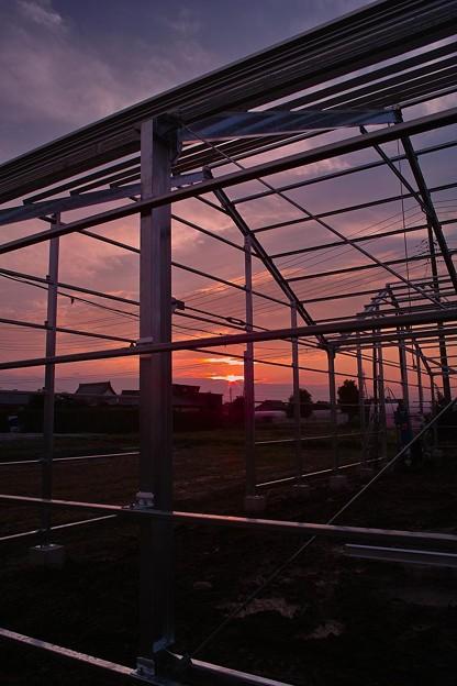 Photos: 再建温室と今日の入り日