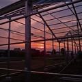 再建温室と今日の入り日