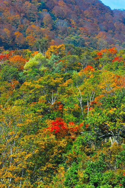 色付く木々(2)