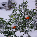 Photos: また雪