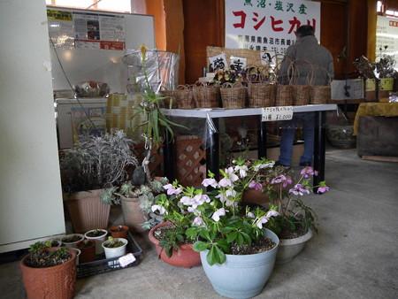160315-02川永農園
