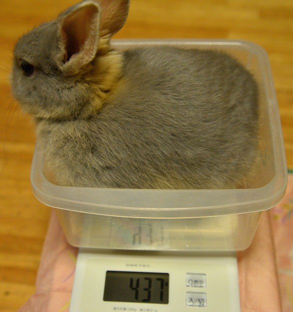 10月14日体重
