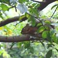 写真: 木の中の忍者