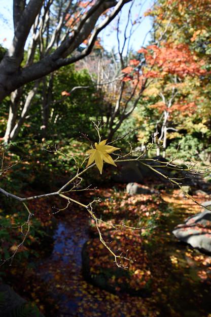 16日日本庭園3