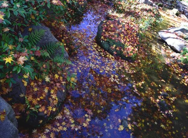 16日日本庭園4