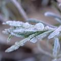 写真: 霜の朝3