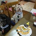 Photos: お誕生日3