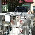 Photos: 子犬2頭