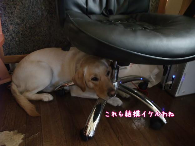 Photos: イケル?!