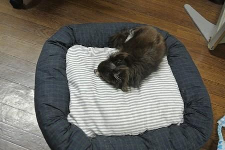 昨日、たまごちゃん作、doudoudogのベッドに初めて乗った和来