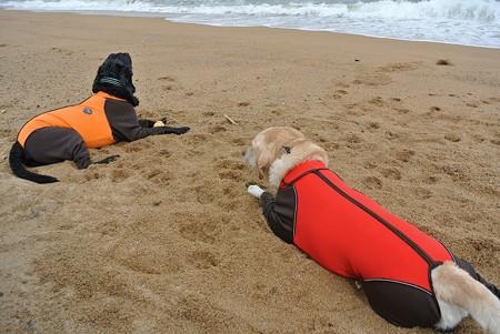 海を見て黄昏れる犬達