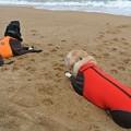 Photos: 海を見て黄昏れる犬達