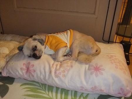 枕(ベッド)が大好き♪