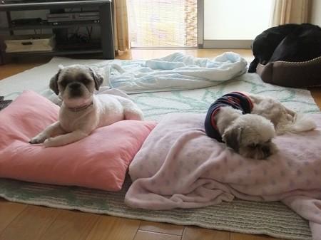 保護犬トリオ(旺次郎と一歩)