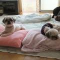 Photos: 保護犬トリオ(旺次郎と一歩)