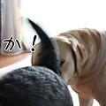 Photos: 近!