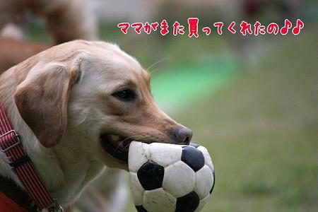 ニューボール
