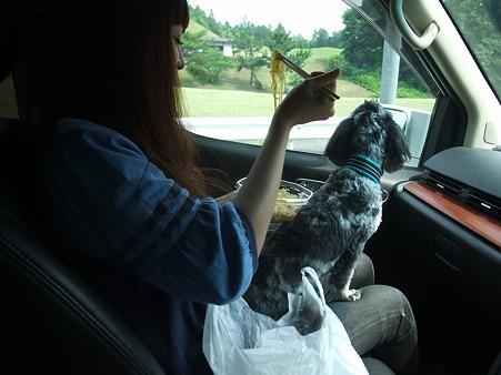 帰りの車中、春馬を膝に冷やし中華を食う女