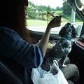 Photos: 帰りの車中、春馬を膝に冷やし中華を食う女