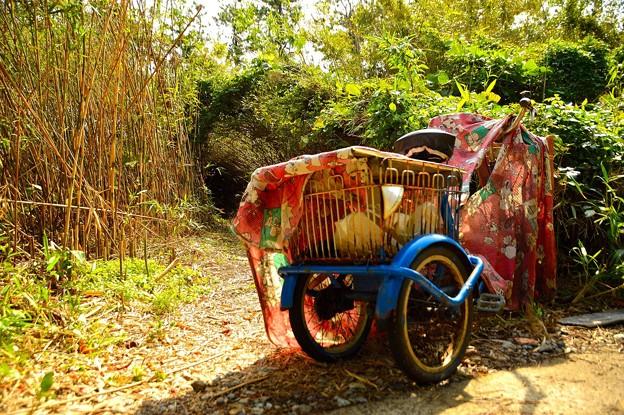 置き去りの三輪車