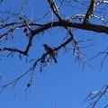 Photos: 青い空に